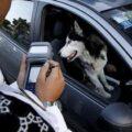 حمل سگ با خودرو